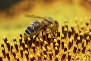 bee-images-58