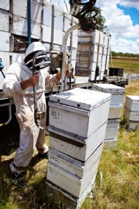 Moving hives with Farmgate Honey