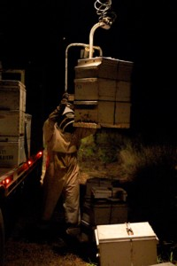 Moving the hives at night